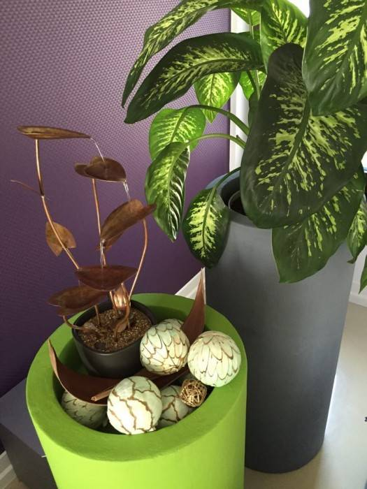 Amenajare cu plante si fantana curgatoare